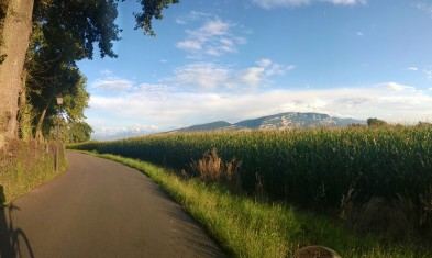 Bike path in Cologny Switzerland where the tip of Mount Blanc is sometimes visible (taken on phone)
