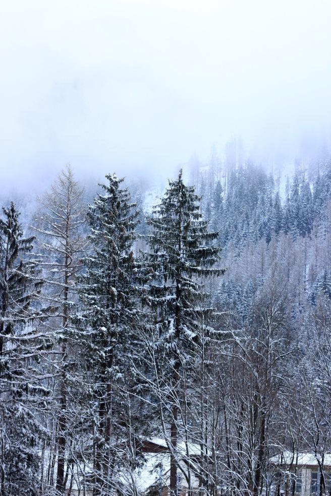 The snowy trees in Chamonix.